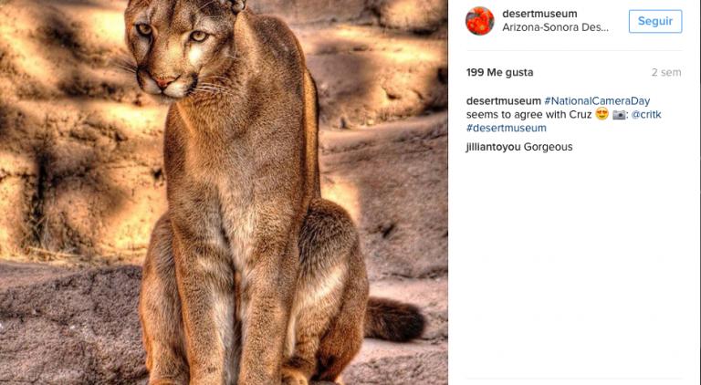 El Arizona-Sonora Desert Museum ofrece ver a los animales en su hábitat natural. Es acuario, reserva natural, zoológico y centro dedicado a la formación ambiental.