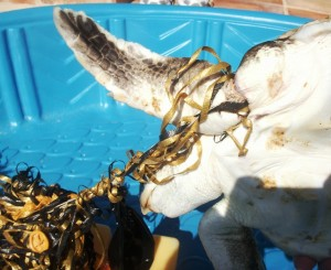 Foto: Fundación para el Asesoramiento y Acción en Defensa de los Animales (FAADA).