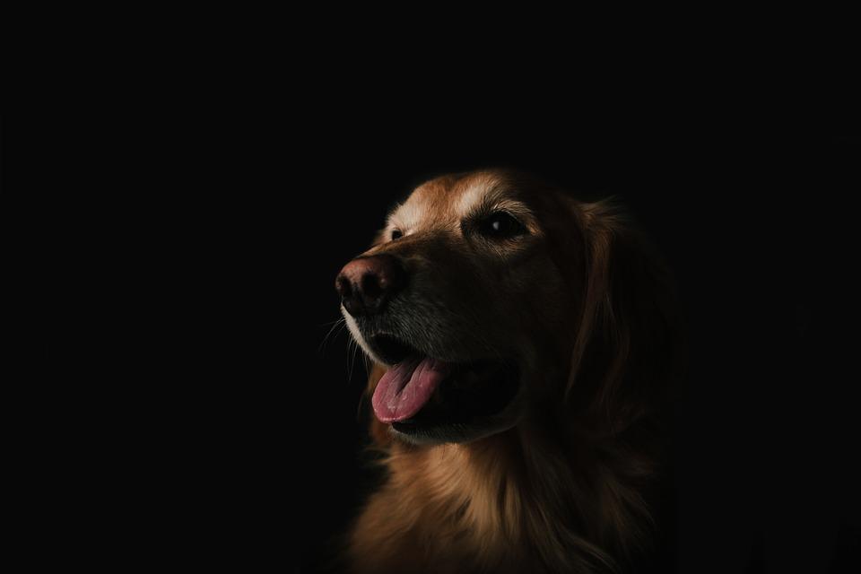 En 2017 llega a CDMX el segundo hospital para mascotas