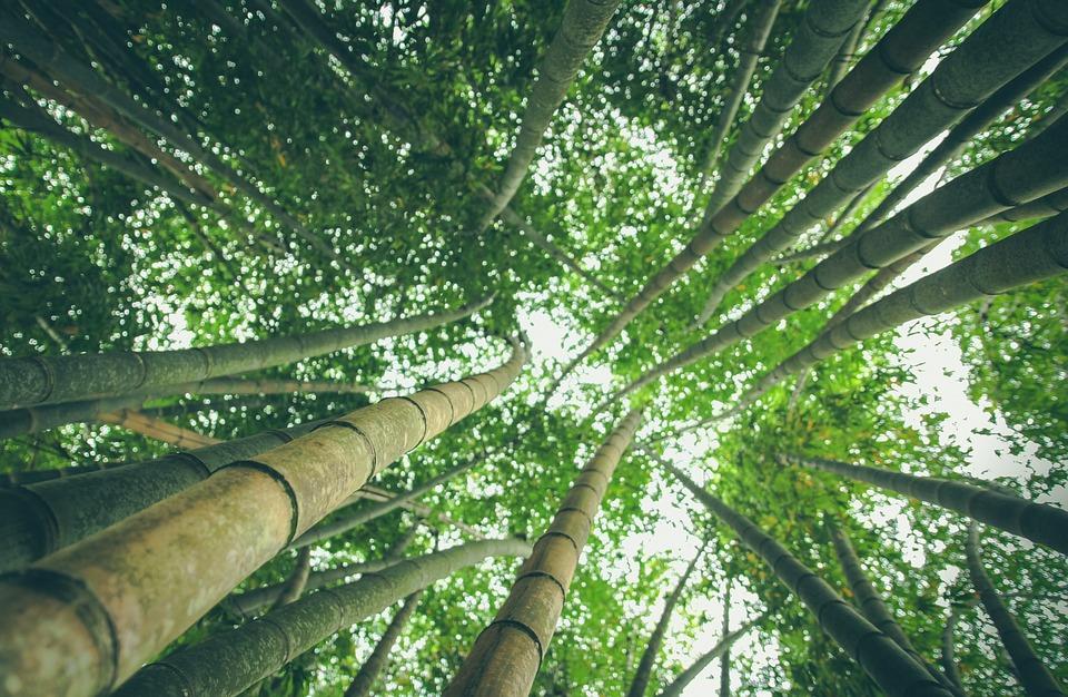 Las tres ecologías