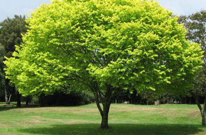 Los árboles, la salvación de las ciudades contra la contaminación y el calor