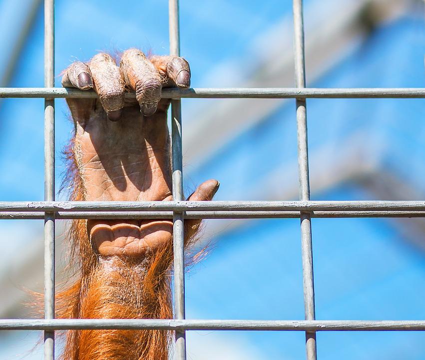 Cuestionan cabida de zoológicos en las ciudades modernas