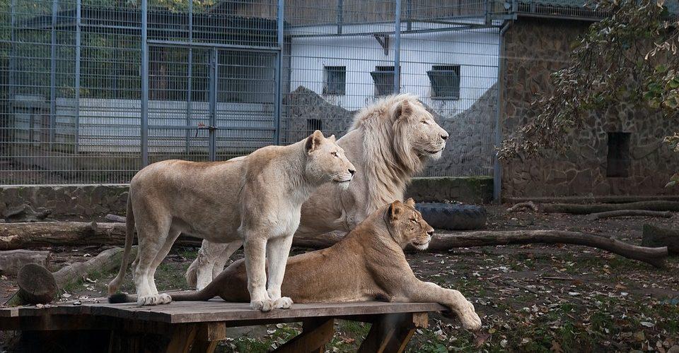 Radiografía de un zoológico